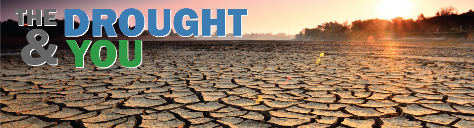 Photo of a dry lakebed with title The Drought & You.